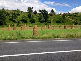 Hay_stacks_romanian_style.jpg