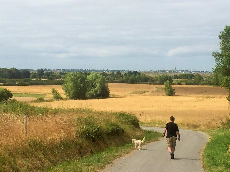A walk by the fields