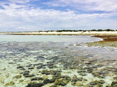 More stromatolites at Hamelin Bay, WA.