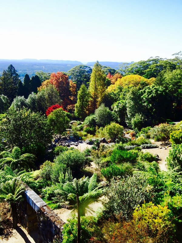 The view from the observation deck, looking across the Blue Mountains Botanic Garden.