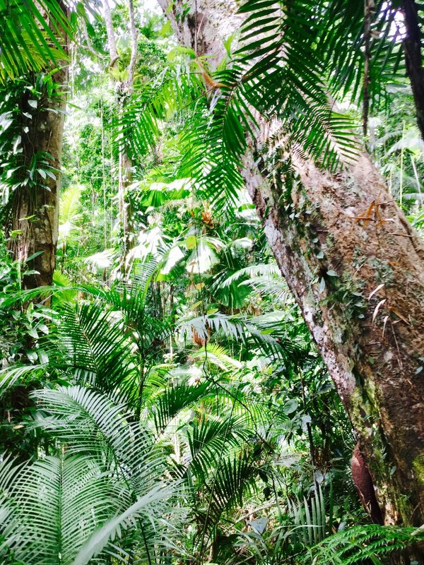 A peek into one area of the Daintree Rainforest.