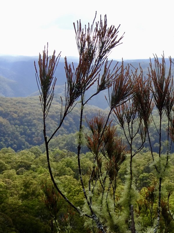 This is the valley that sits below Ebor Falls; the Guy Fawkes River plunges off the tableland here.