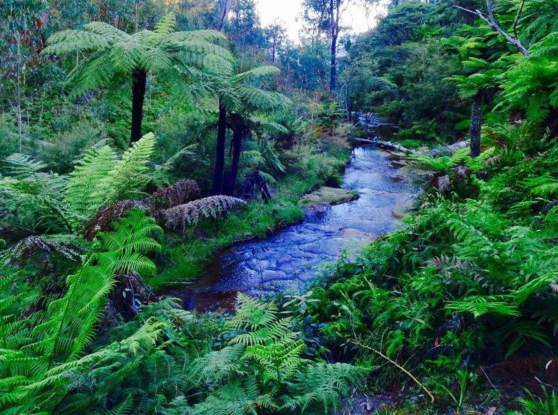 A beautiful stream that we saw near end of our walk at Echo Point.