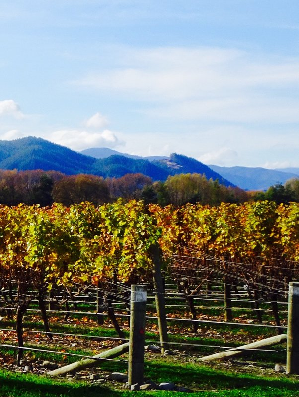 The fall colors in the vineyards near Blenheim. We often saw sheep grazing amongst the vines.