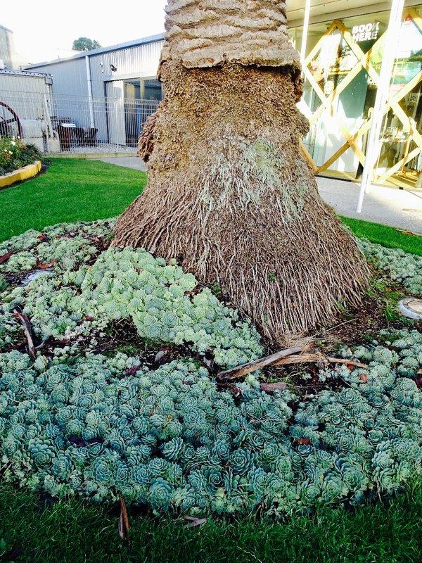 A  garden around a palm tree in Westport