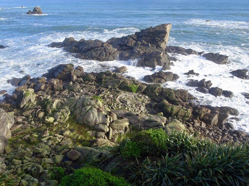 The fur seal colony at Tauranga Bay.