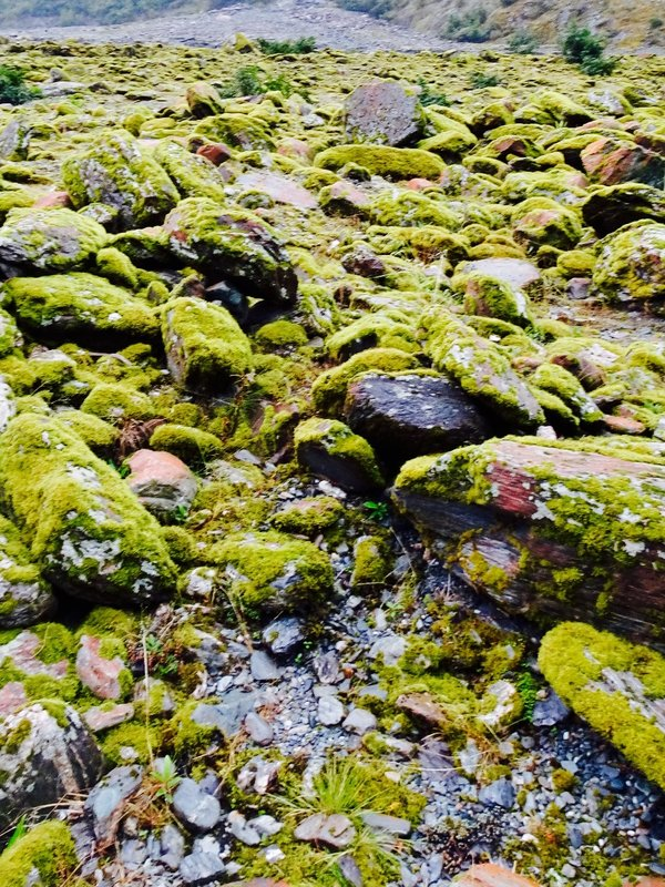 These moss covered rocks were a common sight on our way to the Franz Josef Glacier.