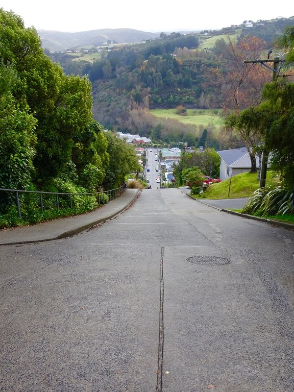Baldwin Street is said to be the world's steepest residential street. We barely noticed the climb, as visited with a local who was getting his exercise by walking up the hill backwards.