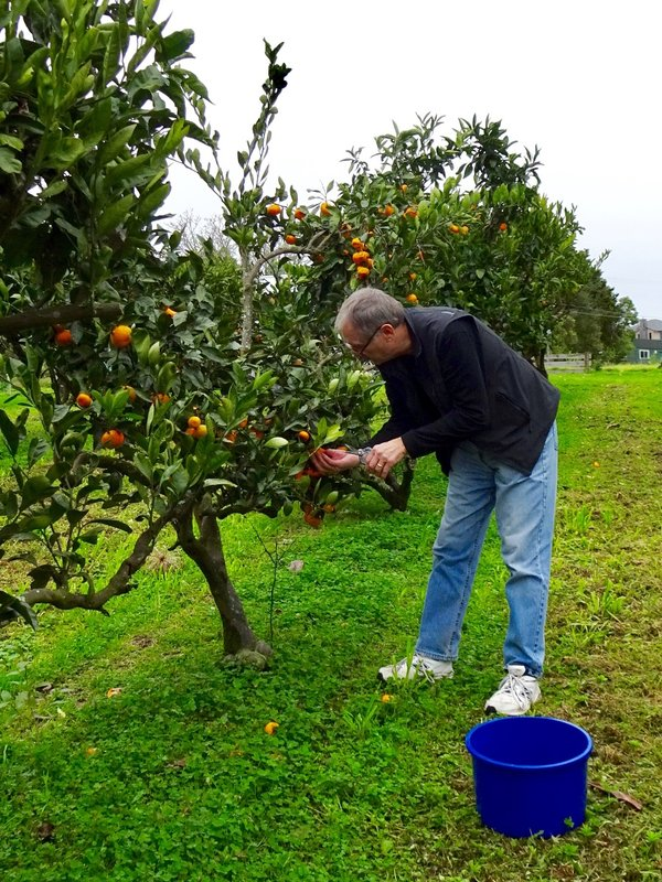 We also made a stop to pick mandarins.