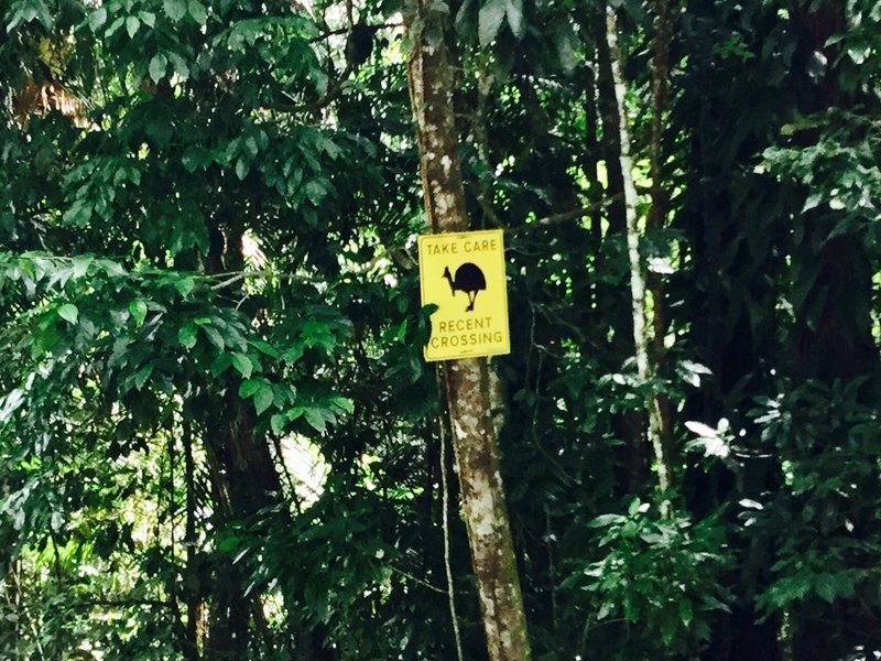 These signs are everywhere in this part of the rainforest. The cassowaries here are considered endangered; being killed by cars, especially in the more populated areas further south, is a big problem.
