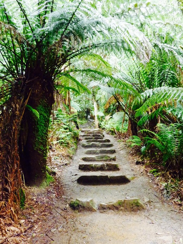 These steps at Mount field NP, lined with tree palms, take you past several waterfalls and very tall sweet gum (eucalyptus) trees.