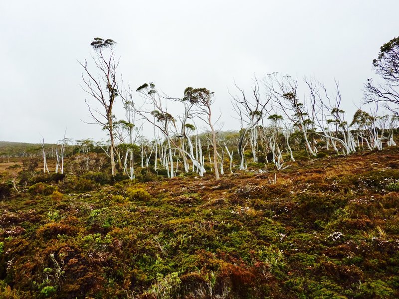 The Wombat Moor at Mount Field NP...plenty of evidence of life but no sightings!