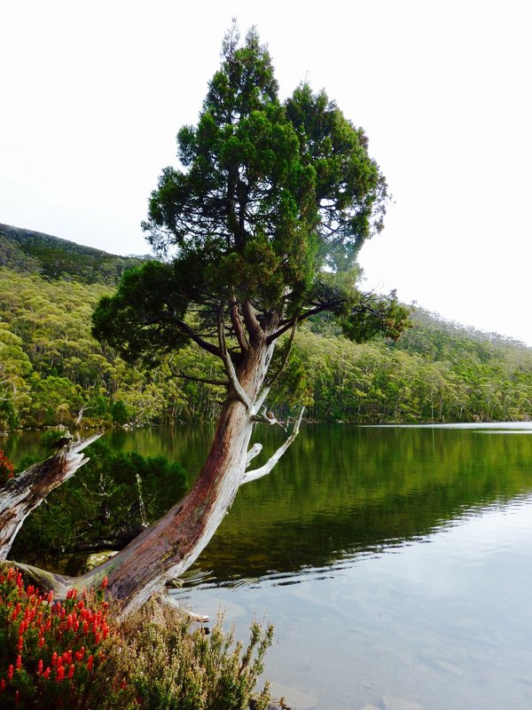 Dobson Lake at Mount Field NP