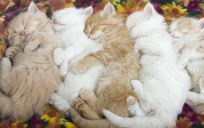 Cute-Baby-Kittens31