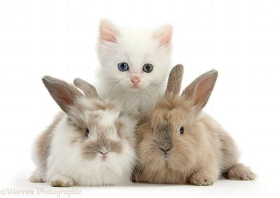 cute-baby-puppies-and-kittens-and-bunniescute-kittens-and-bunnies-hd-wallpaper-for-desktop-background-naccpcuw