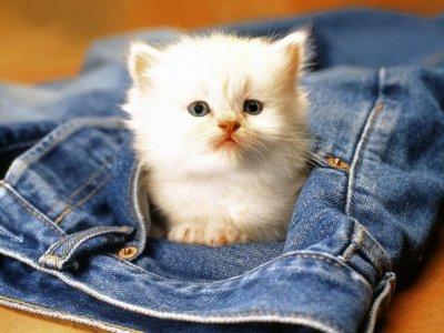 cute-baby-kittensblissfully-cute-baby-animals-cat-kitten-hard-labor-is