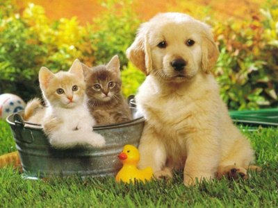 golden-puppy-with-kittens