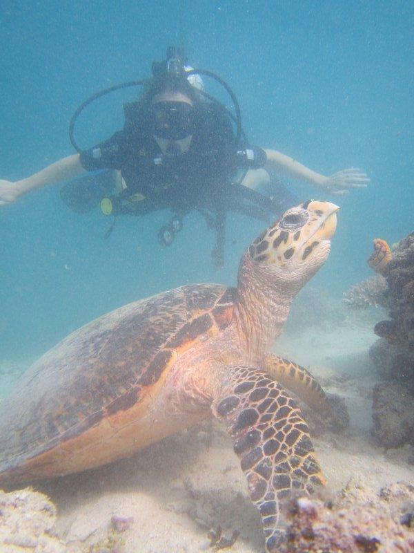 Hawksbill turtle and Jill