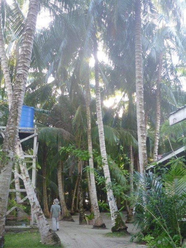 Mabul Island jungle