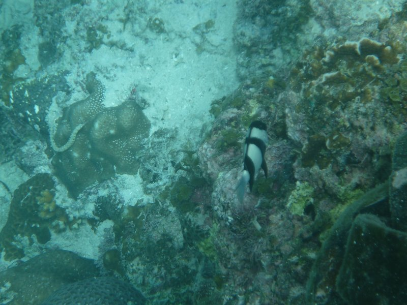 Black and white fish, with a pipe fish on the left