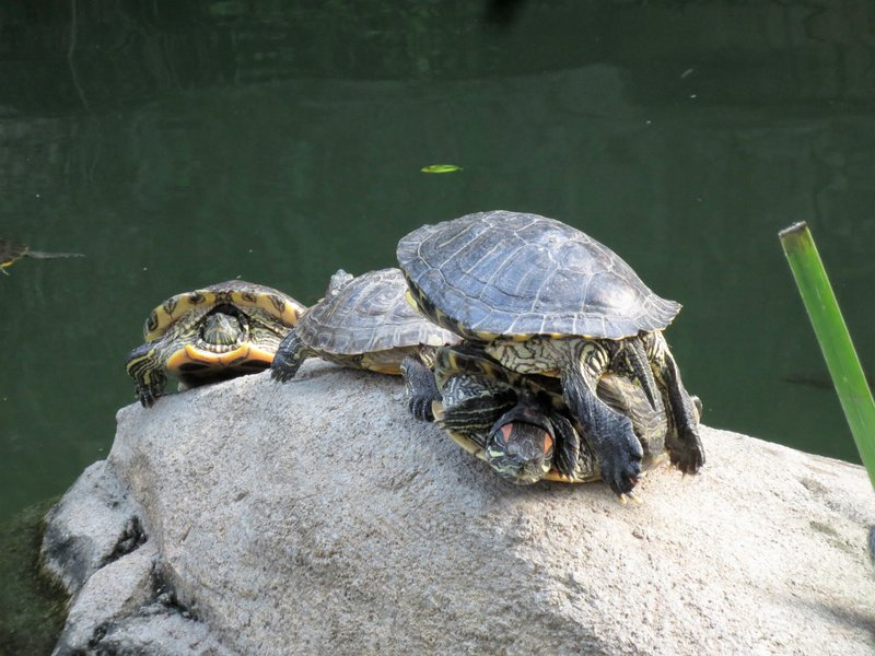 Even the turtles stack for lack of space!