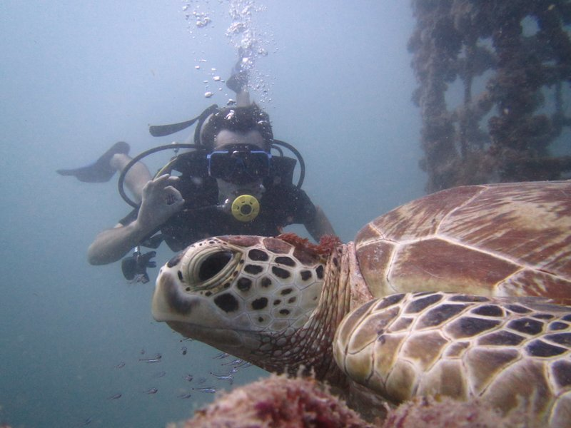 Green turtle and Loic