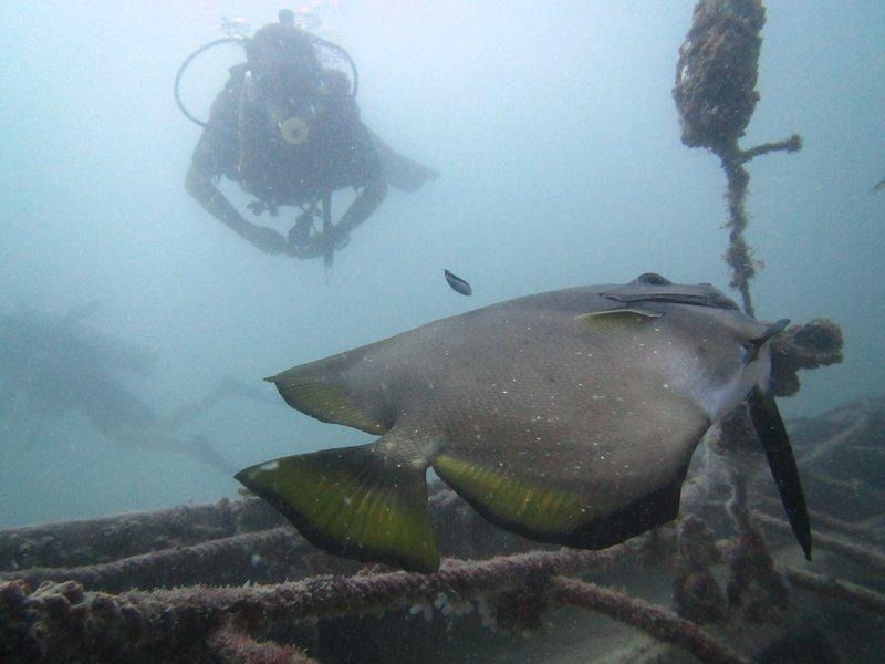 Jill and a Bat fish