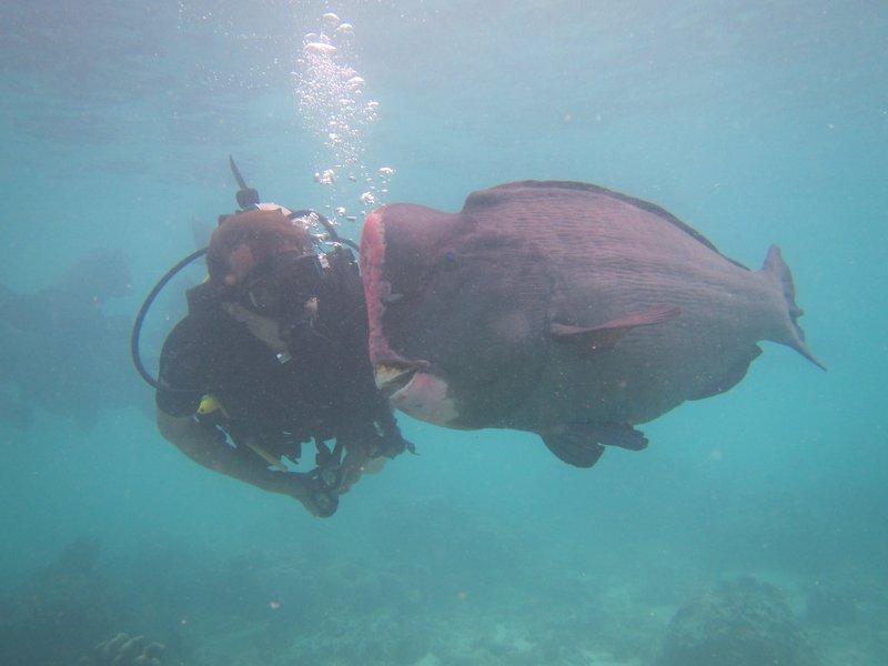 Loic and a Bump head fish