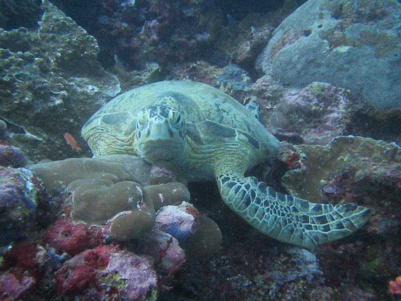 A patient turtle