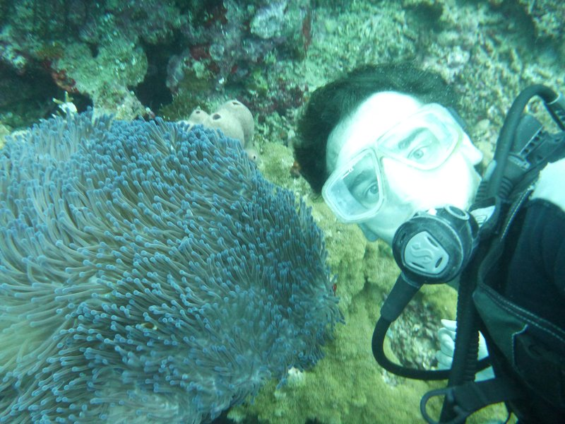 Loic and anemone