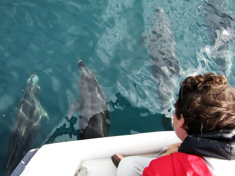 Loic and several bottlenose dolphins inches away