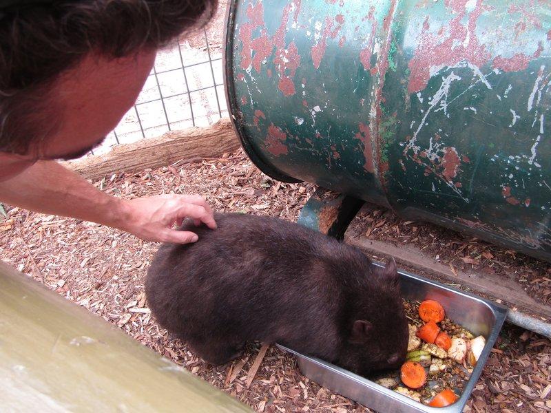 Loic petting Matilda the wombat