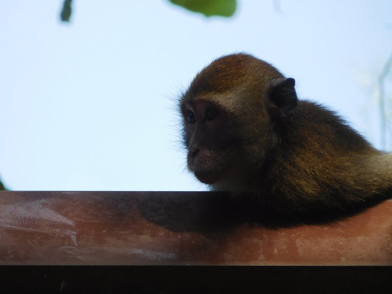 Monkeys were everywhere and quick to steal!
