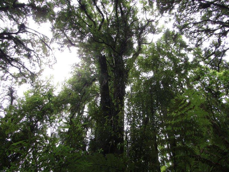New Zealand naturally