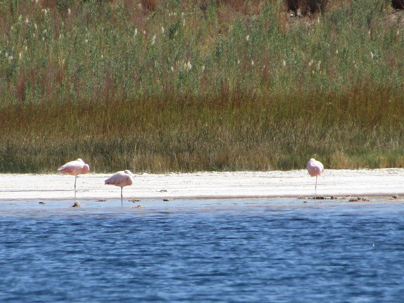 Only a few flamingos remain this time of year, but there is a whole flamingo reserve nearby