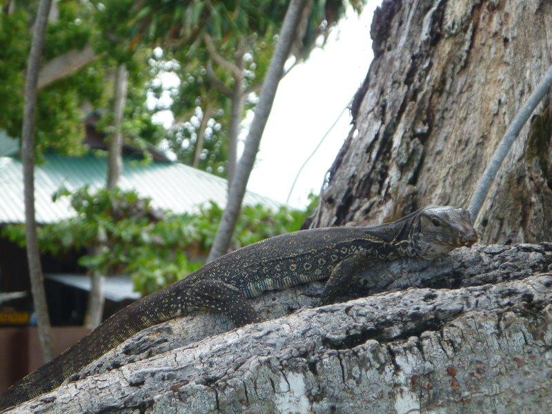 Sipadan's lizard