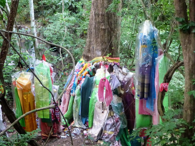 People offer expensive clothing as gifts for prayers to be answered, believing these 700 year old trees have spirits|Les locaux offrent des habits aux arbres centenaires, qui hebergent des esprits