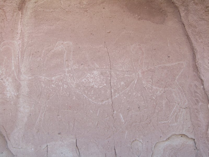 Petroglyph of 3 flamingos