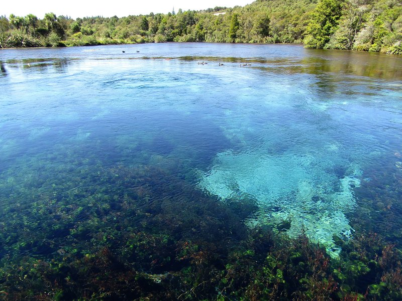 Pupu springs, the purest water in Australasia