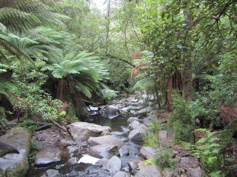Rainforest around Erskine falls