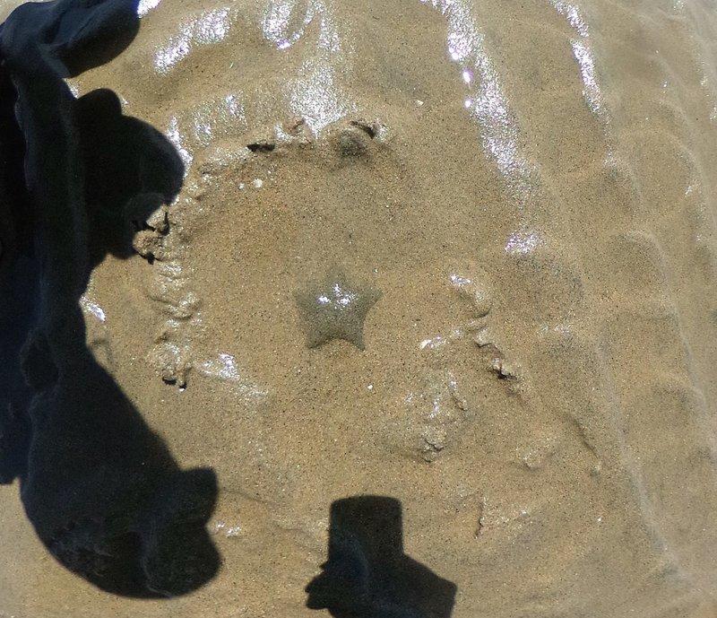 Sand colored starfish