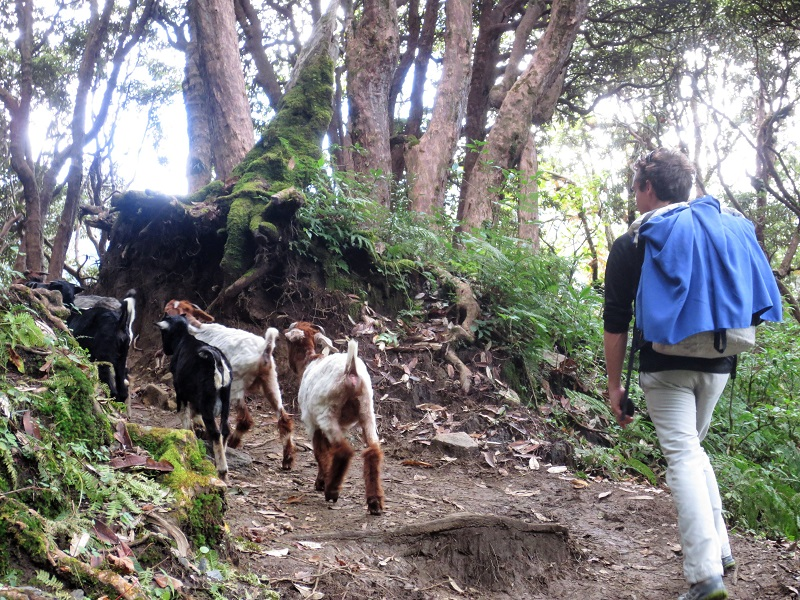 Sharing the path with goats and donkeys|Nos croisons des experts locaux
