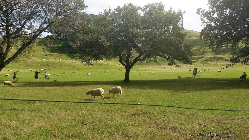 Sheep and archery go together like peas and carrots on One Tree Hill