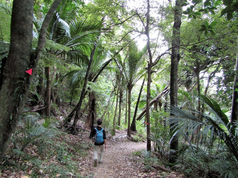 The second half of the walk was through jungle