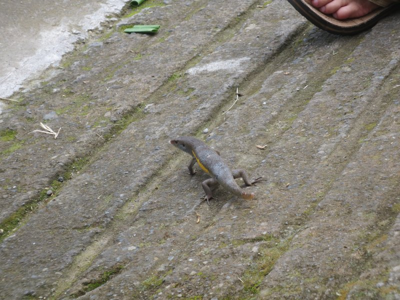 These lizards were everywhere!