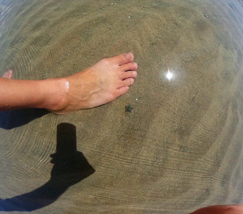 Toe-size starfish