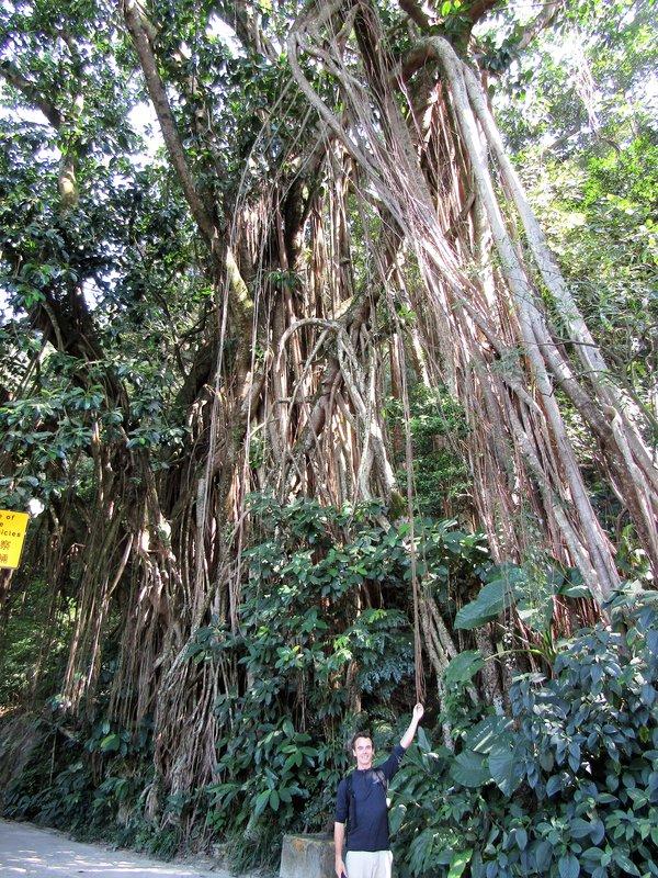 Tree with amazing root system on Victoria Peak