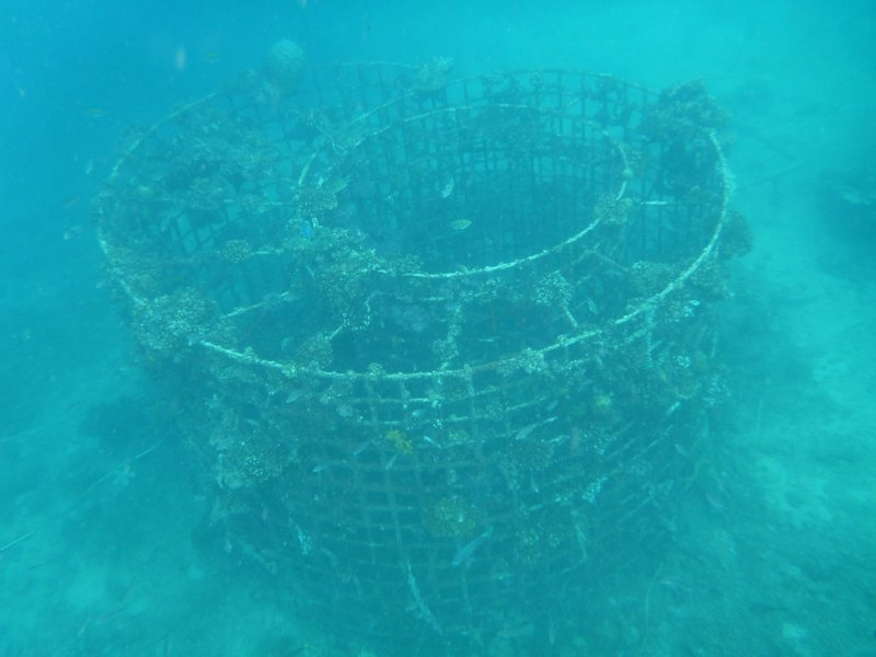 Wire structure with electical current, to assist coral to grow 6x faster