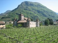 Old castle and Vineyards