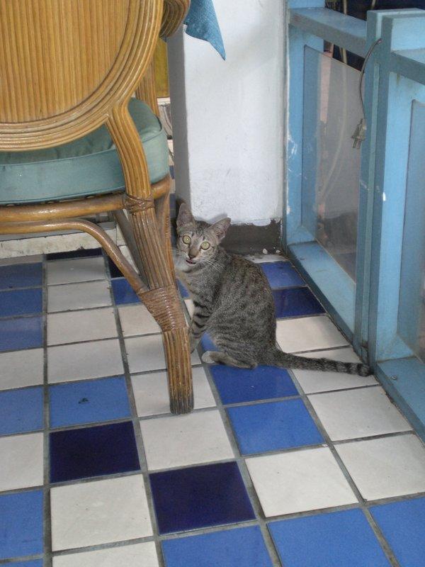 Scary Thin Cat!!!!